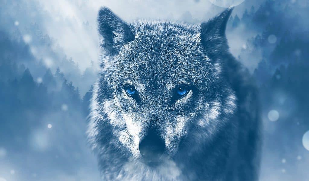 De wolf in jezelf